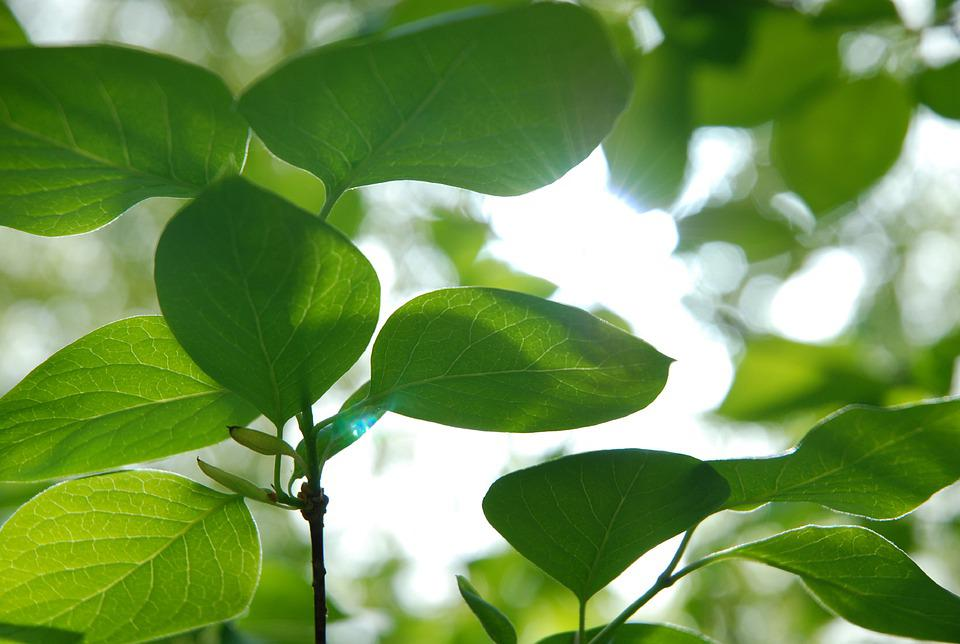Greenery, Green, Freshness, Harmony, Meditation, Nature