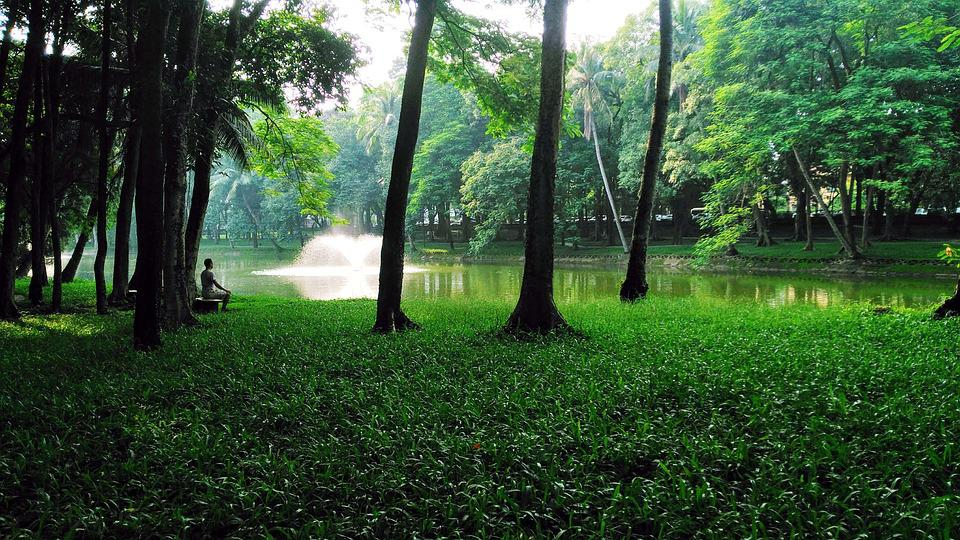 Meditation, Nostalgia, Peaceful, Landscape, Green