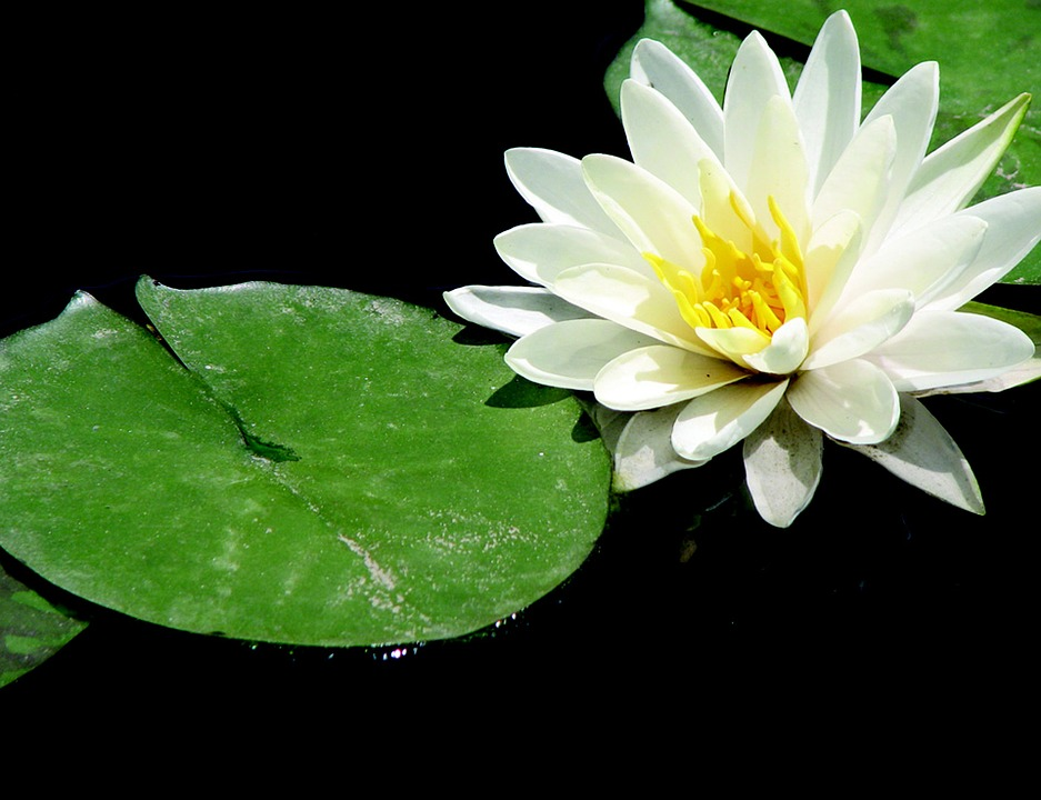 Super Free photo Meditation Relaxation Yoga Lotus Nature Zen - Max Pixel ZI67