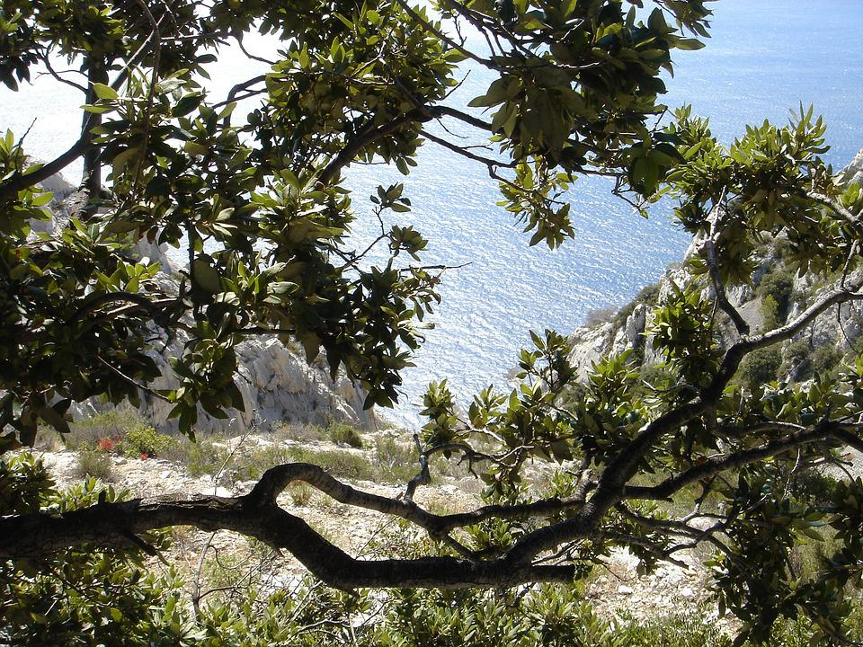 Cove, Sea, Vegetation, Mediterranean, Nature, Blue