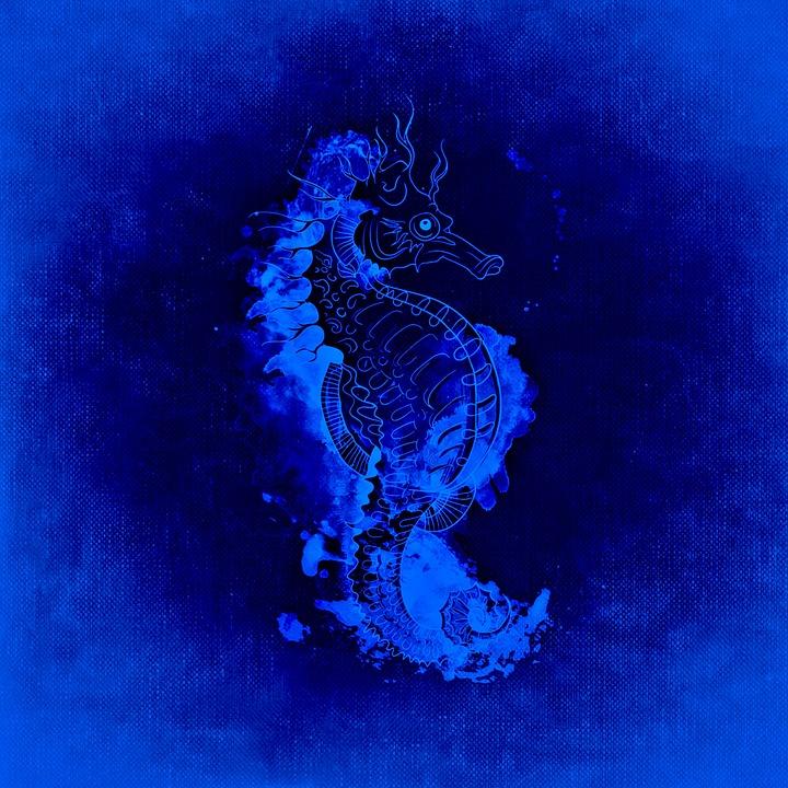 Seahorse, Underwater World, Sea, Meeresbewohner
