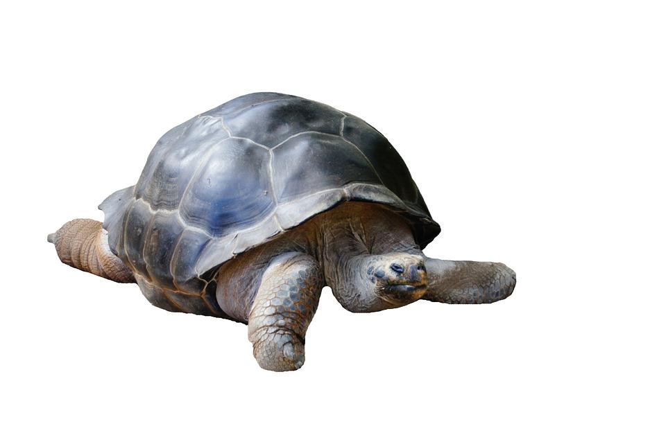Turtle, Water Creature, Meeresbewohner