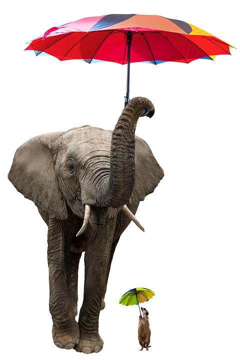 Animals, Elephant, Meerkat, Pachyderm, Umbrella