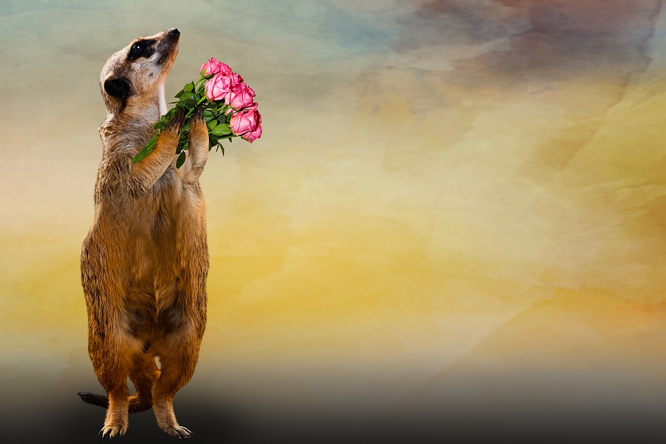 Animal, Meerkat, Bouquet, Thank You, Greeting Card