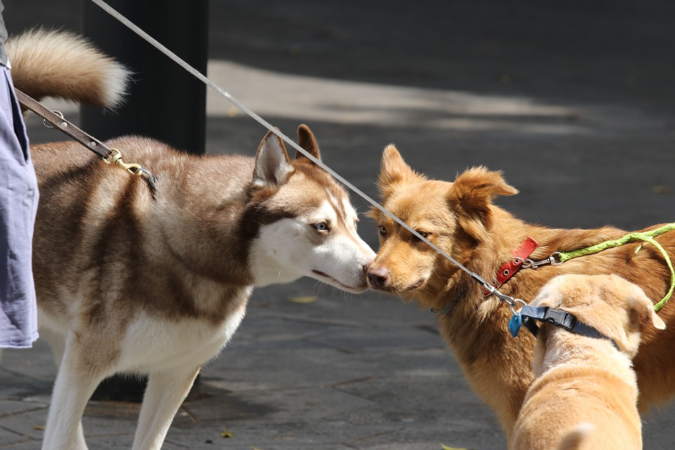 Dogs, Meeting, Friendship, Sniff, Respect