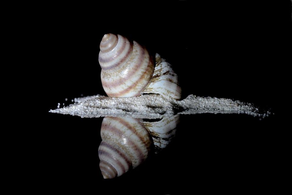 Snail, Sea Snail, Housing, Memory, Holiday, Decorative