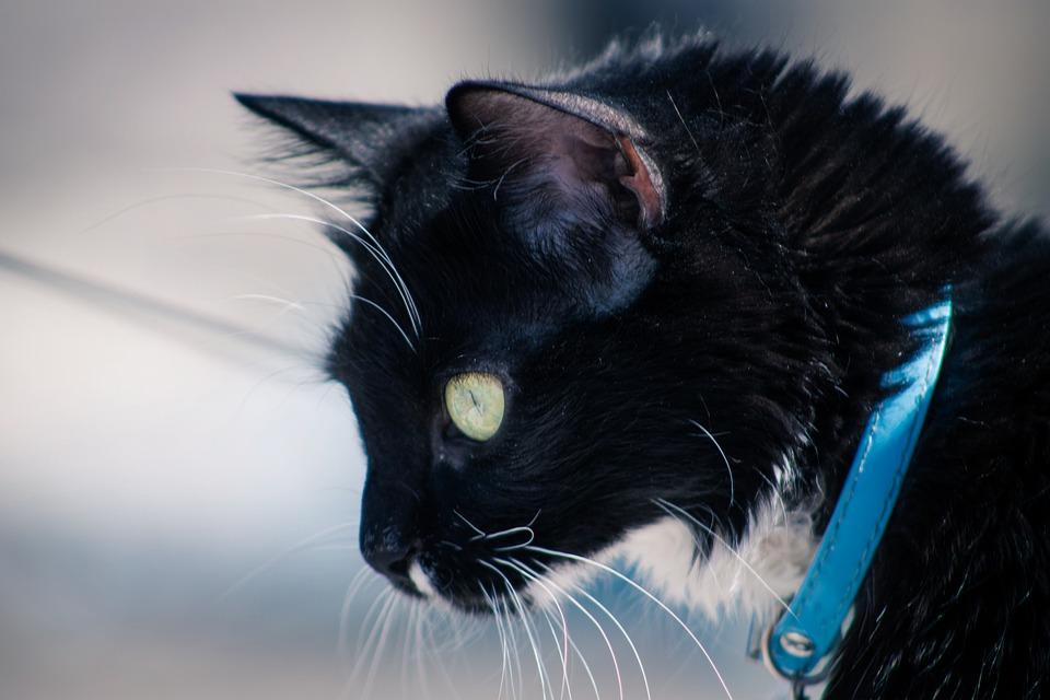 Meow-Cute-Face-Eyes-Animal-Portrait-Pet-