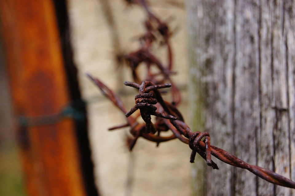 Barbed Wire, Verrostst, Fence, Metal, Old