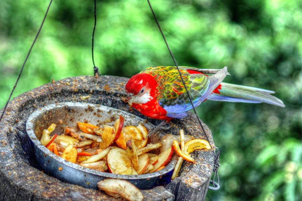 Bird, Zoo, Metropolitan, By Feeding, Bird Food, Parrot