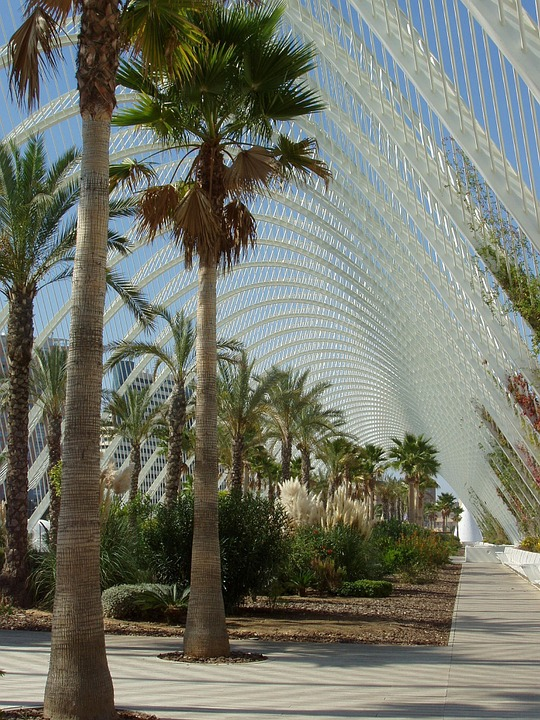 Mexico, Palms, Palm Trees, Structure, Canopy, Steel