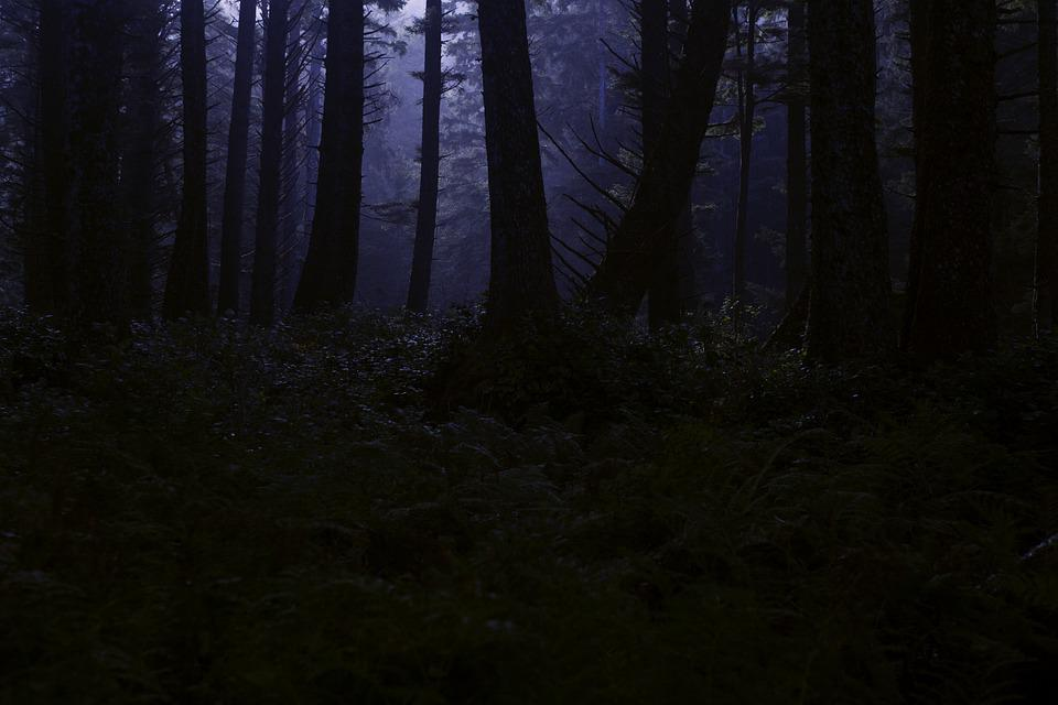 Forest, Wilderness, Night, Midnight, Trees, Woods