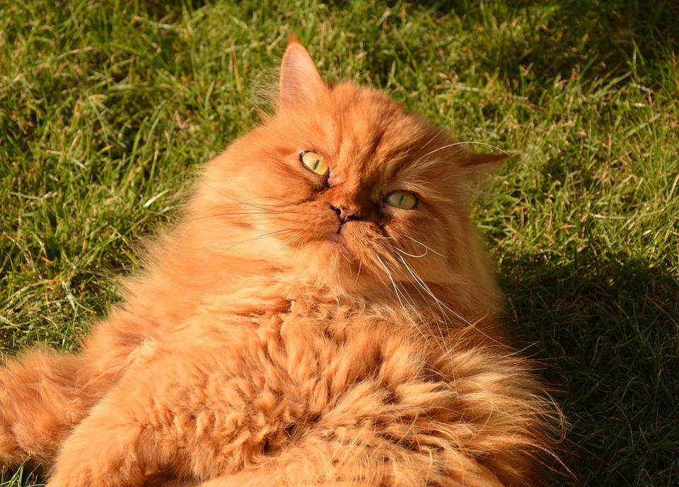 Cat, Cat's Eyes, Animals, Mieze, Domestic Cat, Adidas