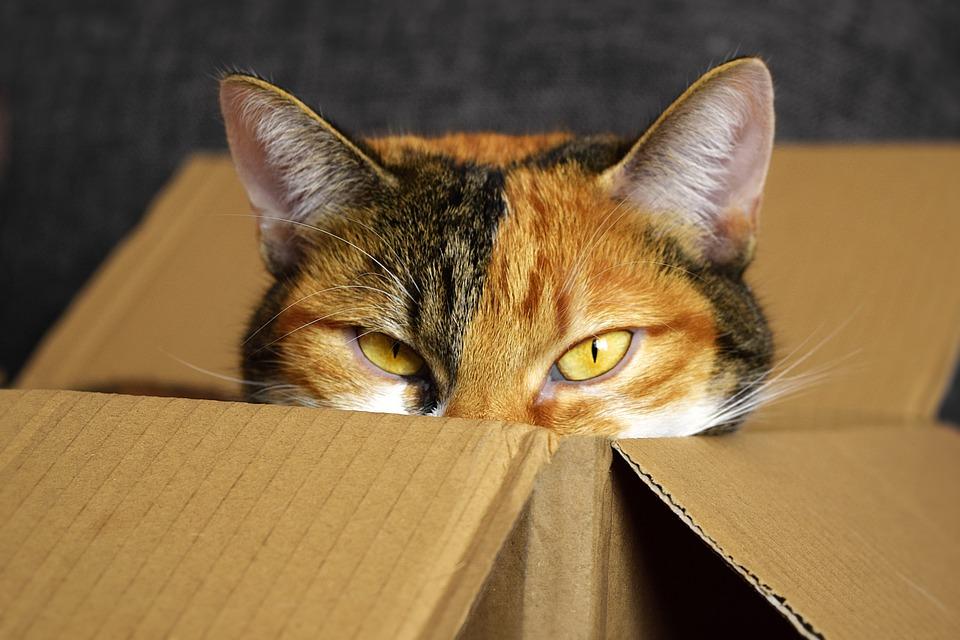 Lucky Cat, Cardboard, Cat, Mieze, Cozy Place