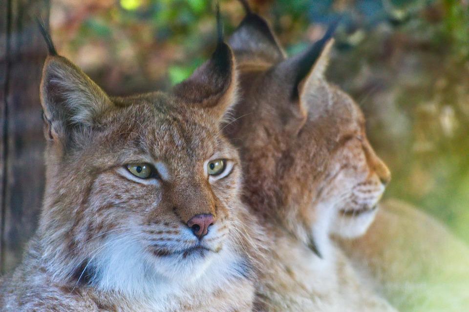 Cat, White, Predator, Kitten, Mammal, Fur, Mieze, Cute