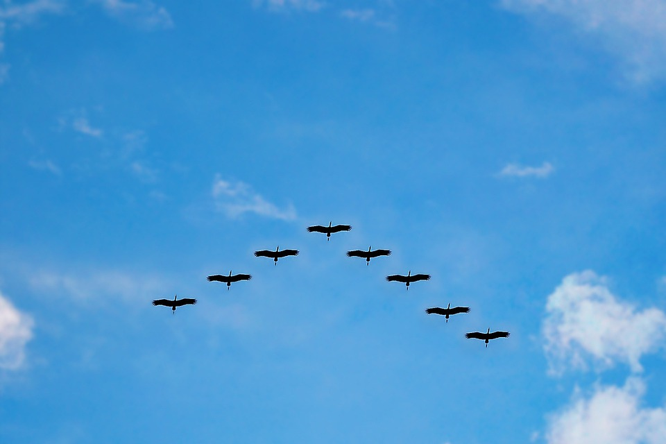 Birds, High Fly, Flying, Migrating, Wildlife