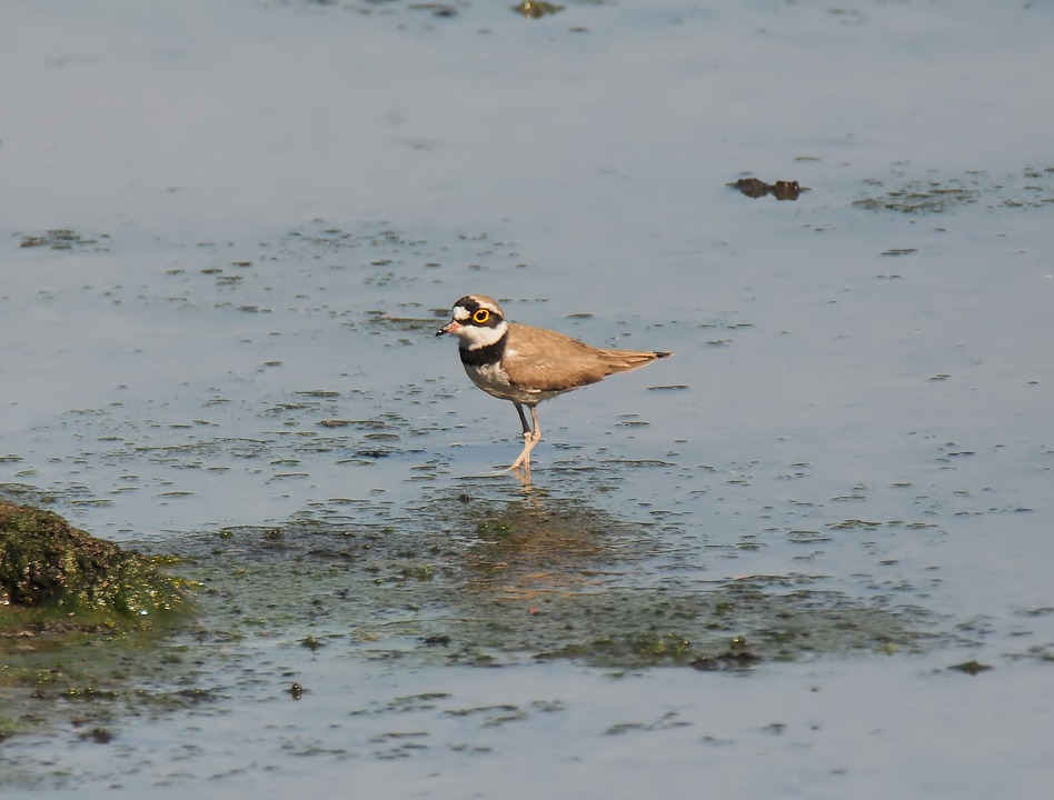 Small, Wild, Wildlife, Bird, Migratory, Animal
