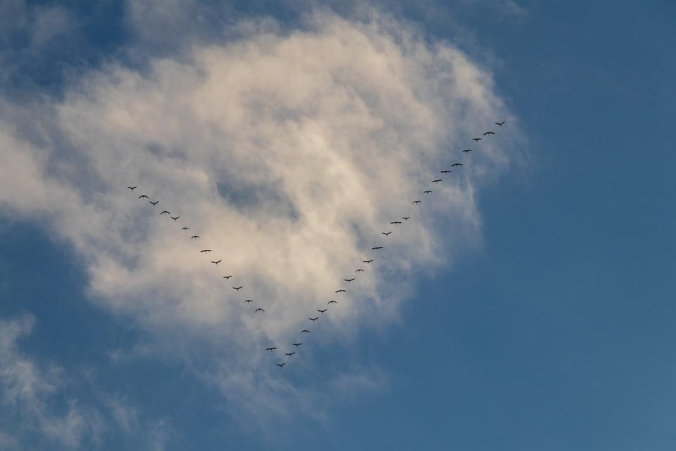 Migratory Birds, Autumn, Nature, Flock Of Birds, Sky