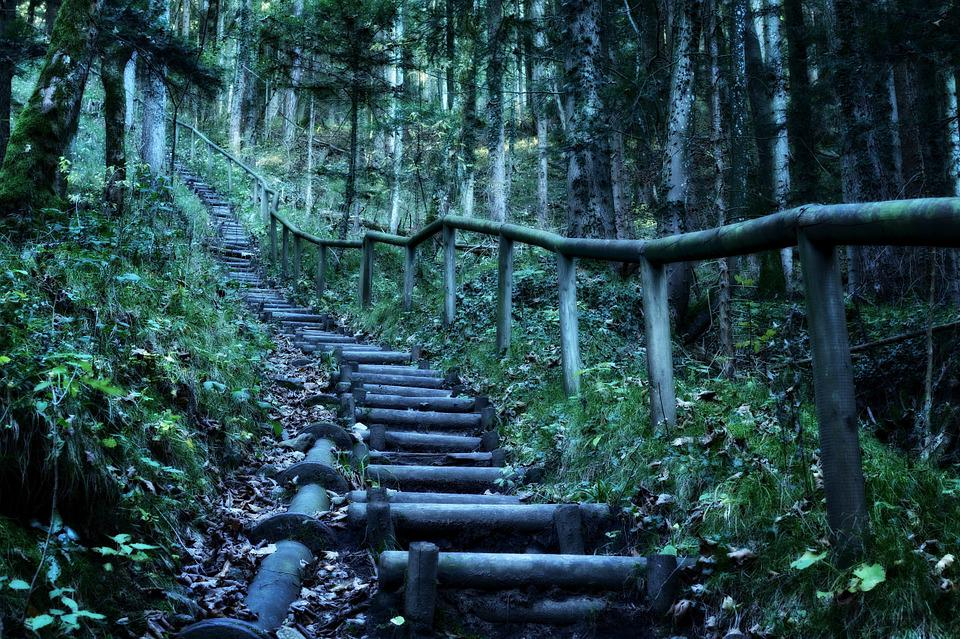 Hiking, Forest, Nature, Landscape, Migratory Path