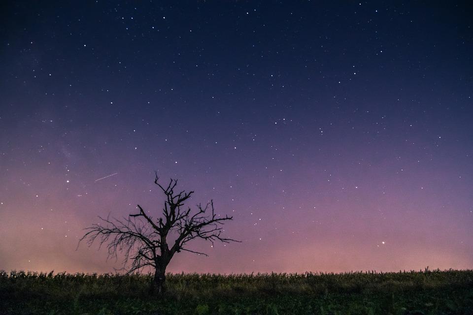 Celebrities, Meteor, Milky Way, Lone Tree