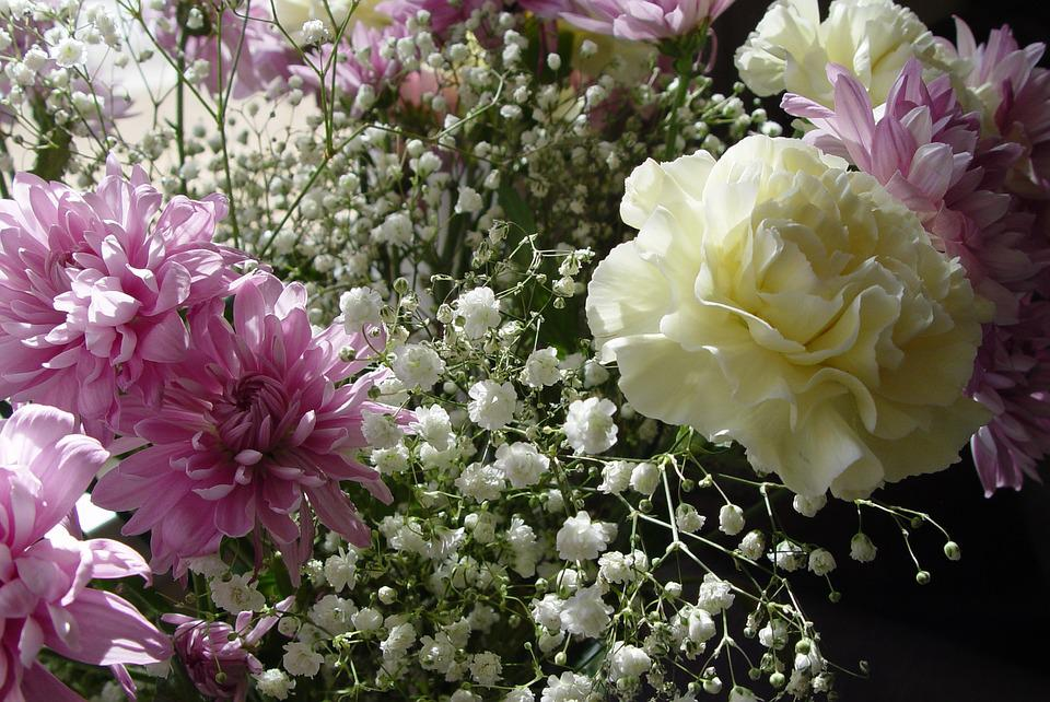 Carnation, Flowers, Million Stars, Baby's Breath