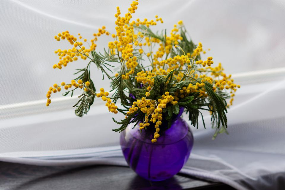 Mimosa, Yellow Flowers, Primroses, Flowers In A Vase