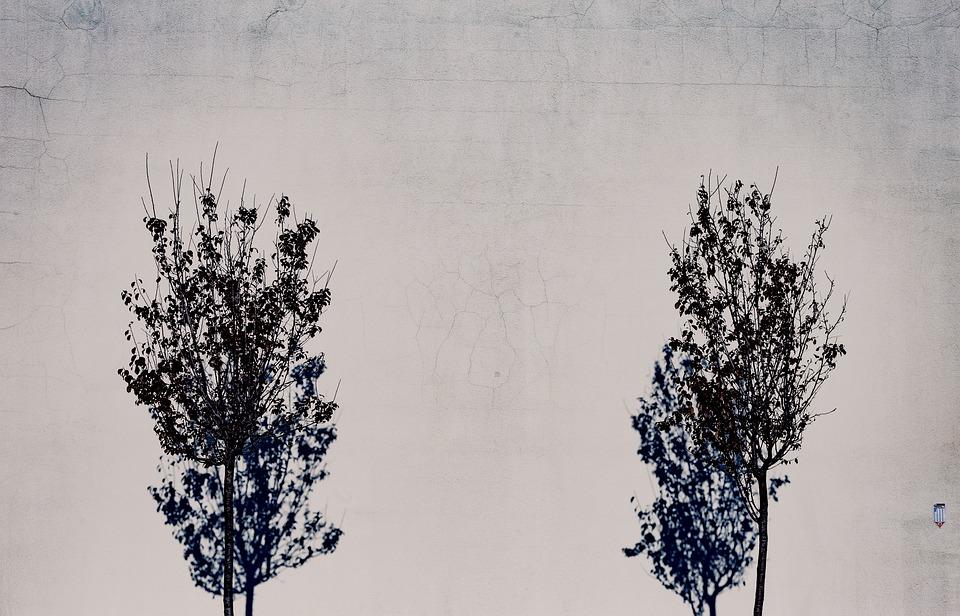 Wall, Trees, Shadows, Simple, Minimal