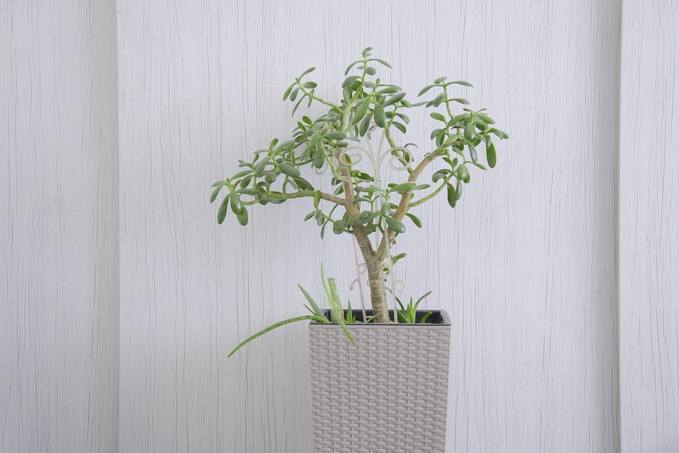 Minimum, Leaf, Flower, White, Tree, Room