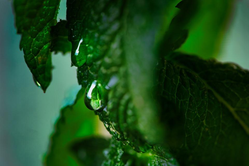 Drop Of Water, Mint, Wet, Rain, Leaf, Raindrop