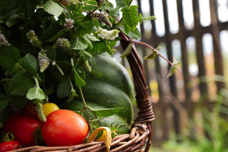 Basket, Vegetables, Scuttle, Tomato, Pumpkin, Mint