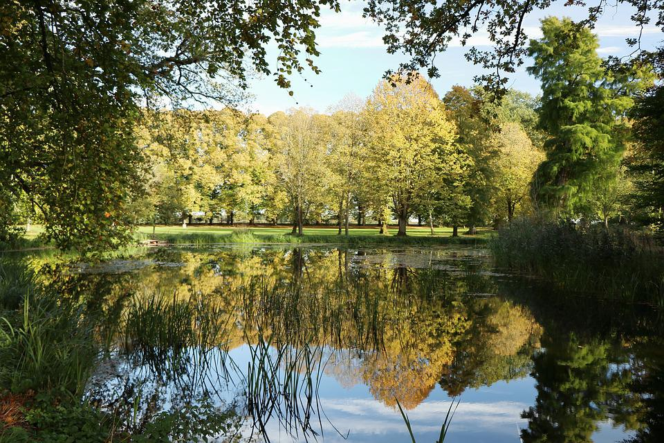 Autumn, Lake, Mirror, Natural, Water, Autumnal