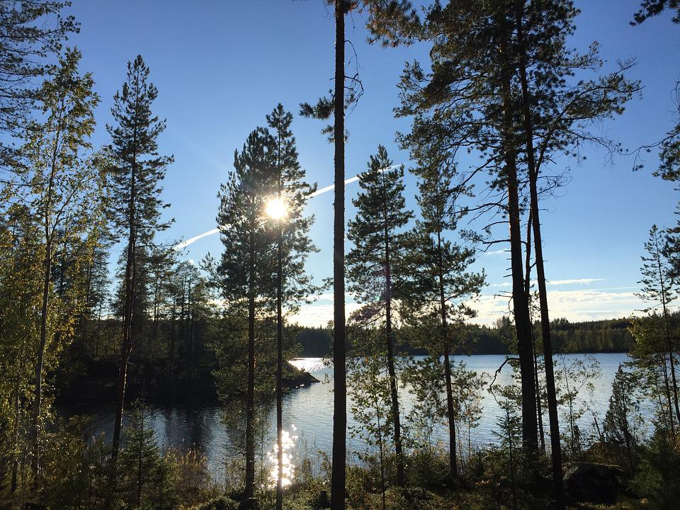Water, More, View, Mirror, Blue, Nature, Tree, Finland