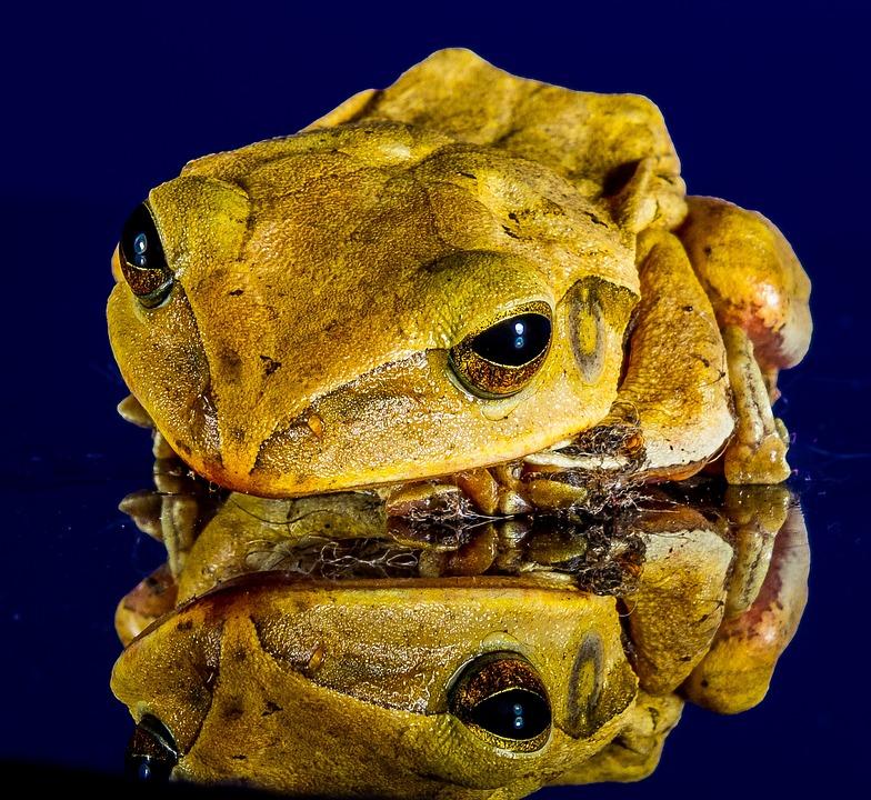 Frog, Close, Mirror Image