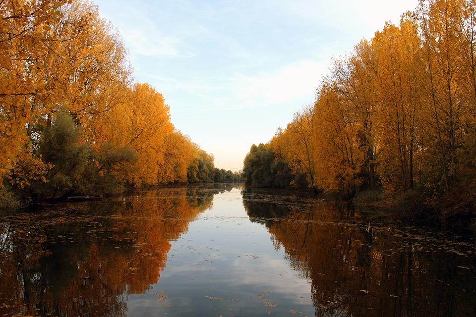 River, Trees, Reflection, Mirroring, Mirror Image