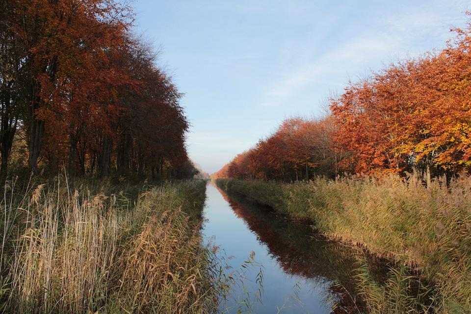 Autumn, Beech, Water, Mirror, Reed, Landscape, Trees