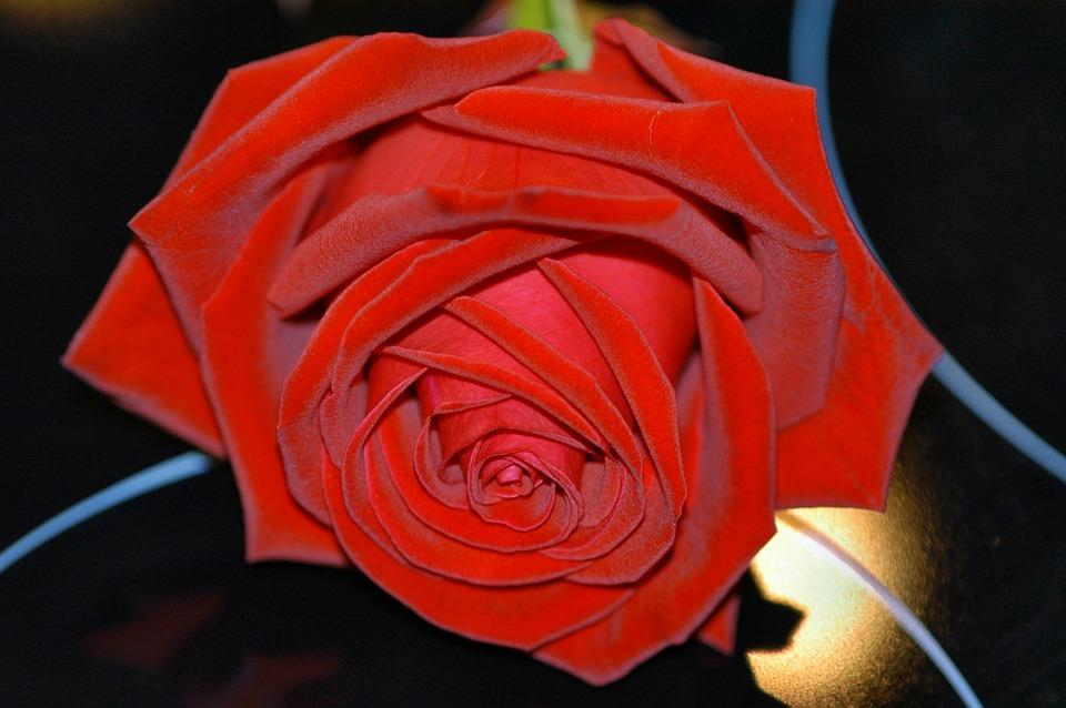 Rose, Mirror, Night, Red Petals