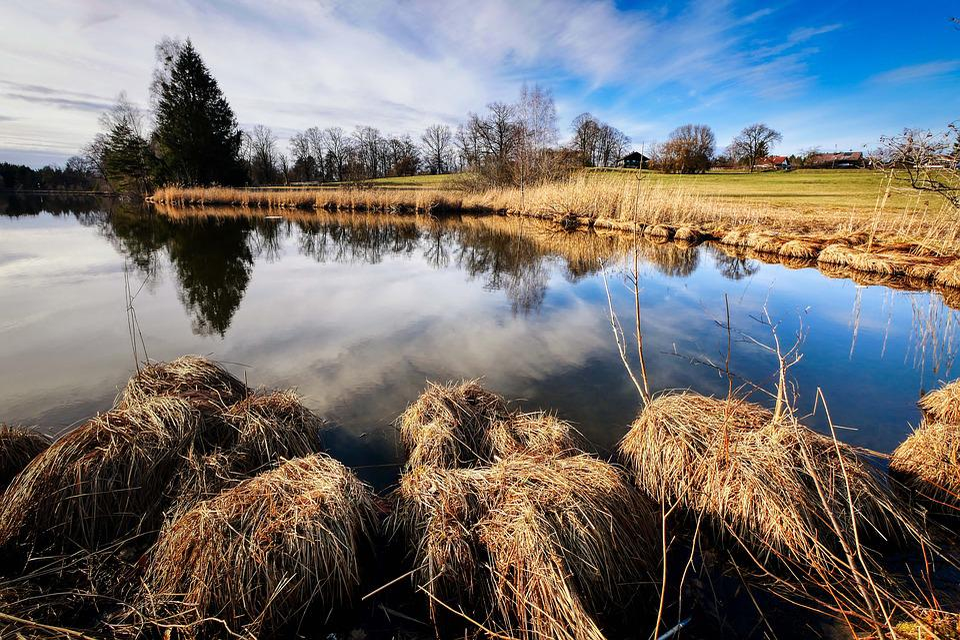 Lake, Reflection, Mirroring, Bank, Landscape, Nature