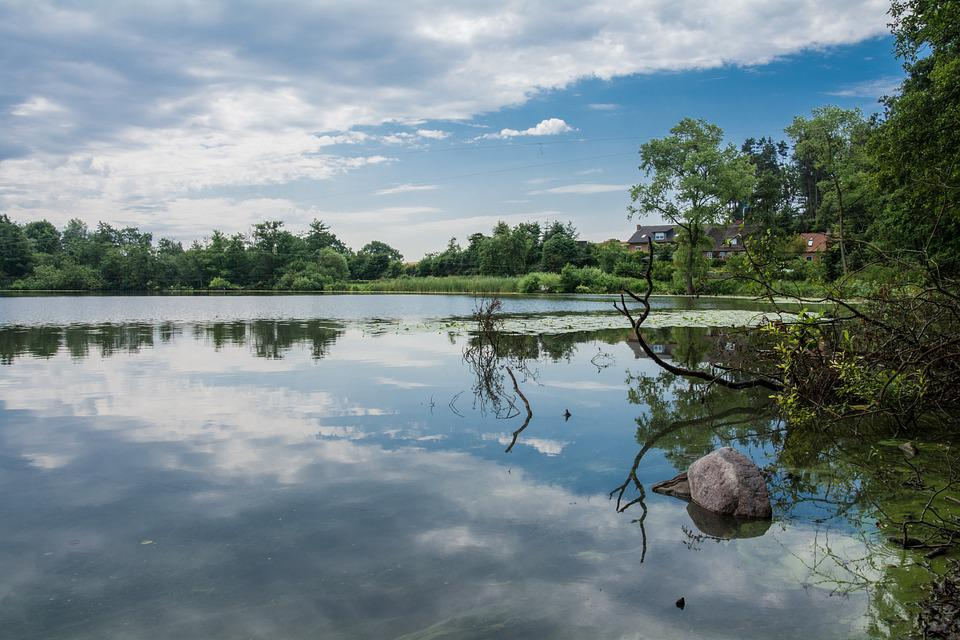 Water, Lake, Clouds, Mirroring, Forest, Bank, Summer