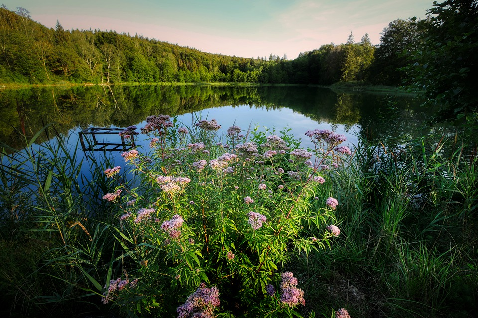 Lake, Dusk, Mirroring, Flowers, Forest, Bank, Pond