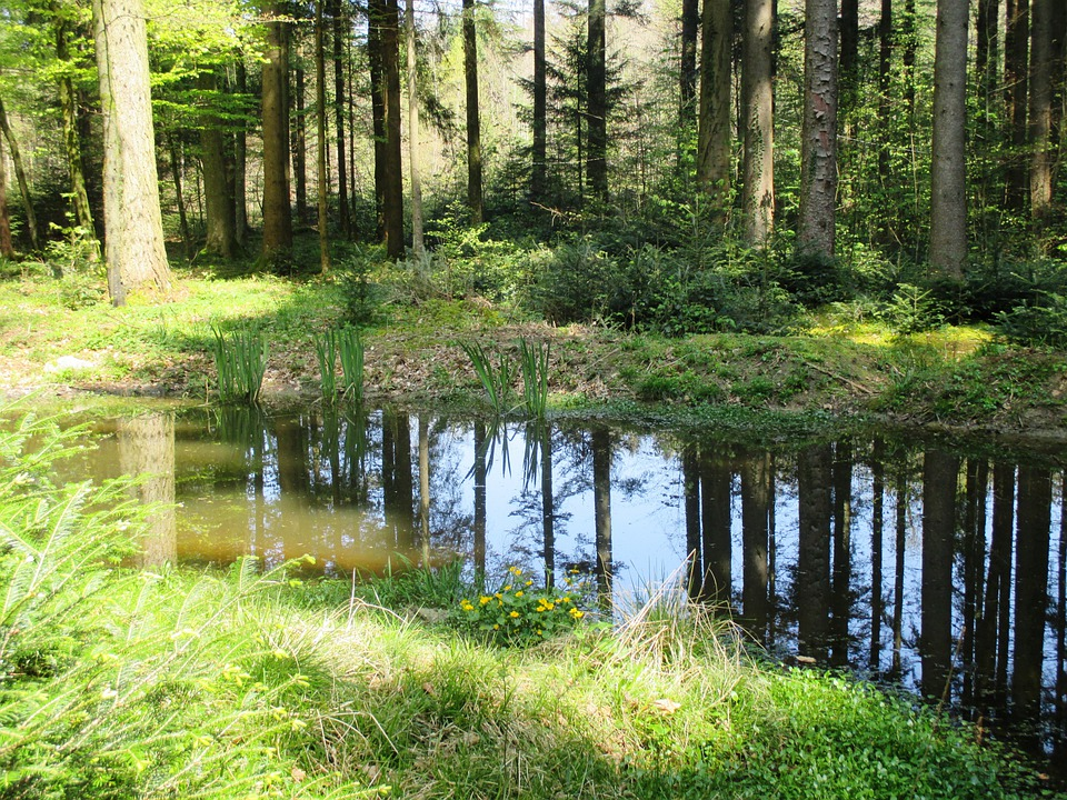 Forest, Pond, Trees, Mirroring, Nature, Rest
