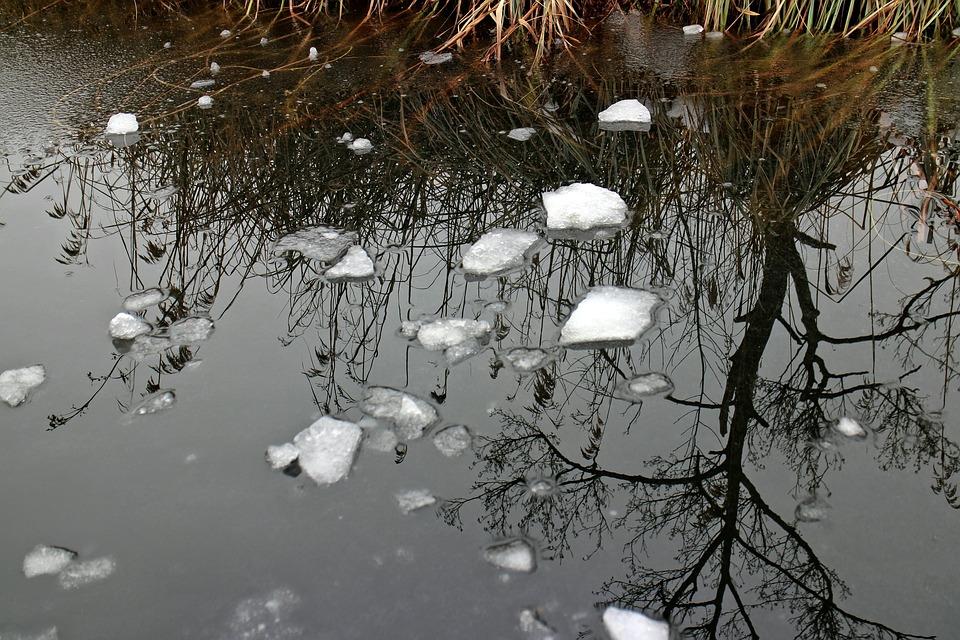 Water, Ice, Mirroring, Frozen, Plant, Winter, Nature