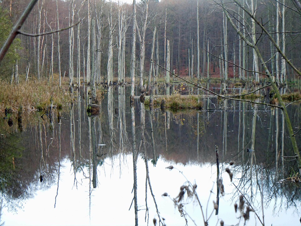 Trees In The Water, Waldsee, Mirroring