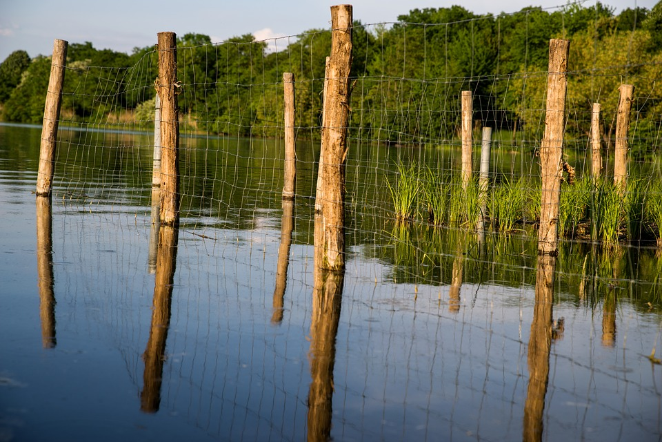Lake, Bars, Fence, Water, Trees, Mirroring, Rod