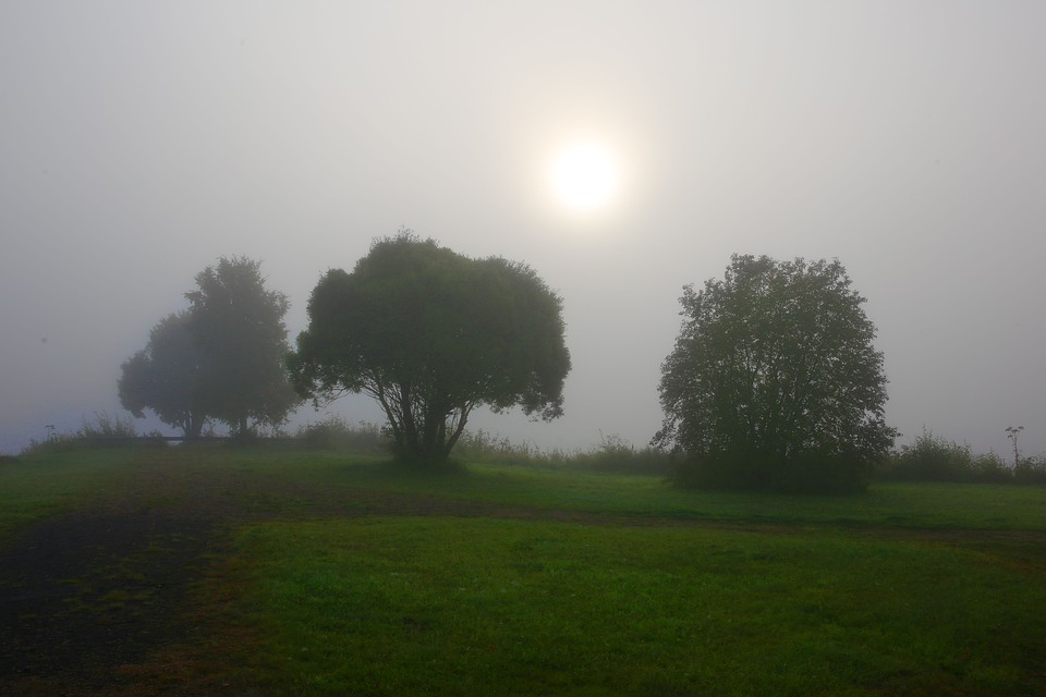 Mist, Tree, Solar, Morning Card