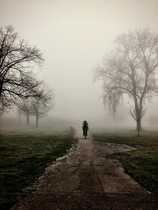 Mist, Cycler, Nature, Trees, Path, Green, Natural