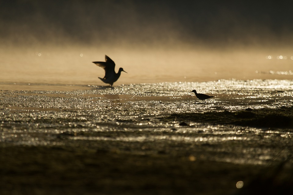 Birds, Fog, Silhouette, Dawn, Ground, Mist, Sunrise
