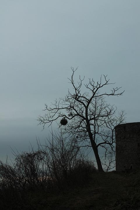 Tree, Dark, Mistletoe, Autumn, Winter