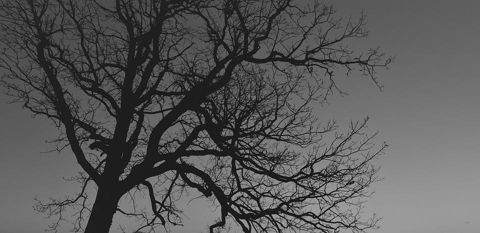 Tree, Silhouette, Branches, Horror, Misty, Foggy, Fog
