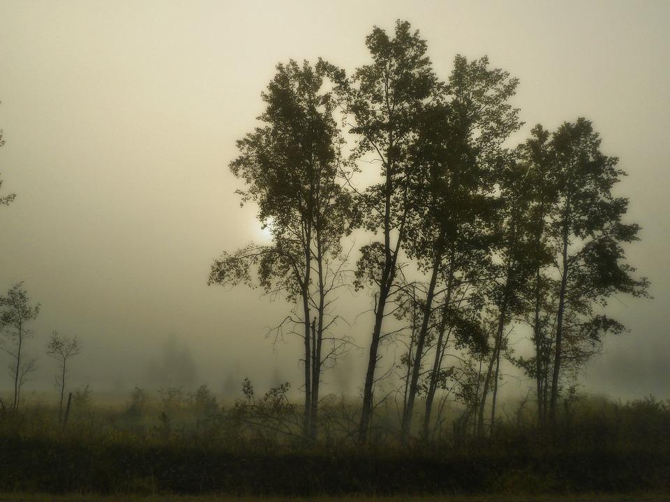Foggy, Morning, Tree, Sun, Fog, Mist, Misty, Woods