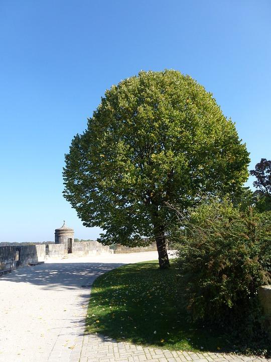 Tree, Large, Green, Summer, Castle, Mitwitz