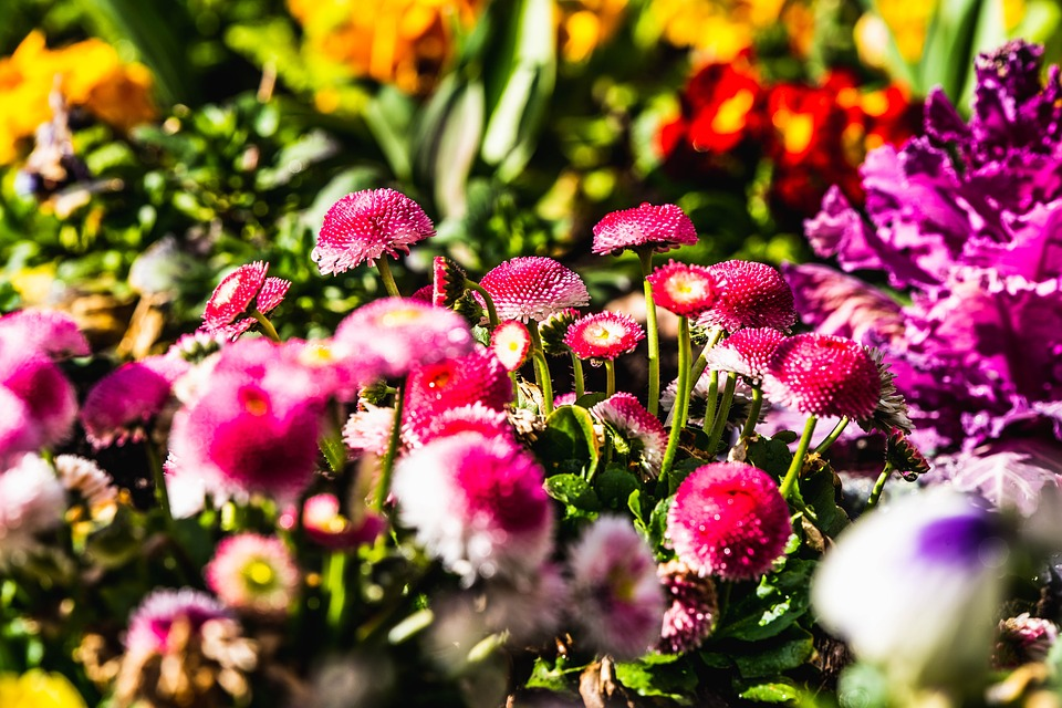 Flowers, Flower Bed, Pink, Yellow, Red, Mix, Spring